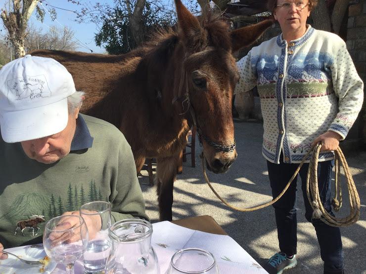 Hevonen tuli juttelmeaan Daskalojannin aukiolla