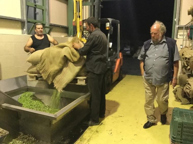 Oliivit aloittavat matkansa öljyksi